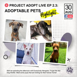 Project Adopt