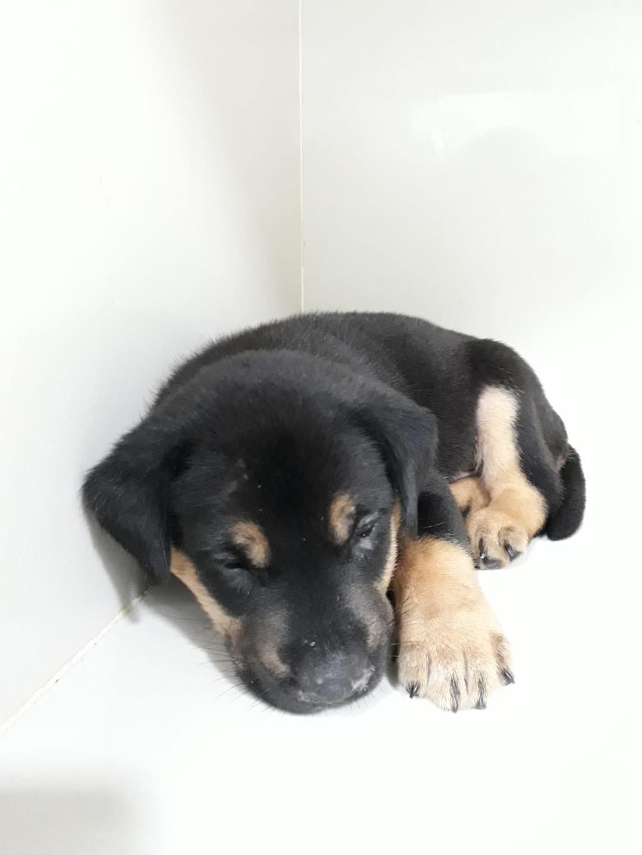 4 puppies-19 Feb 2021-3