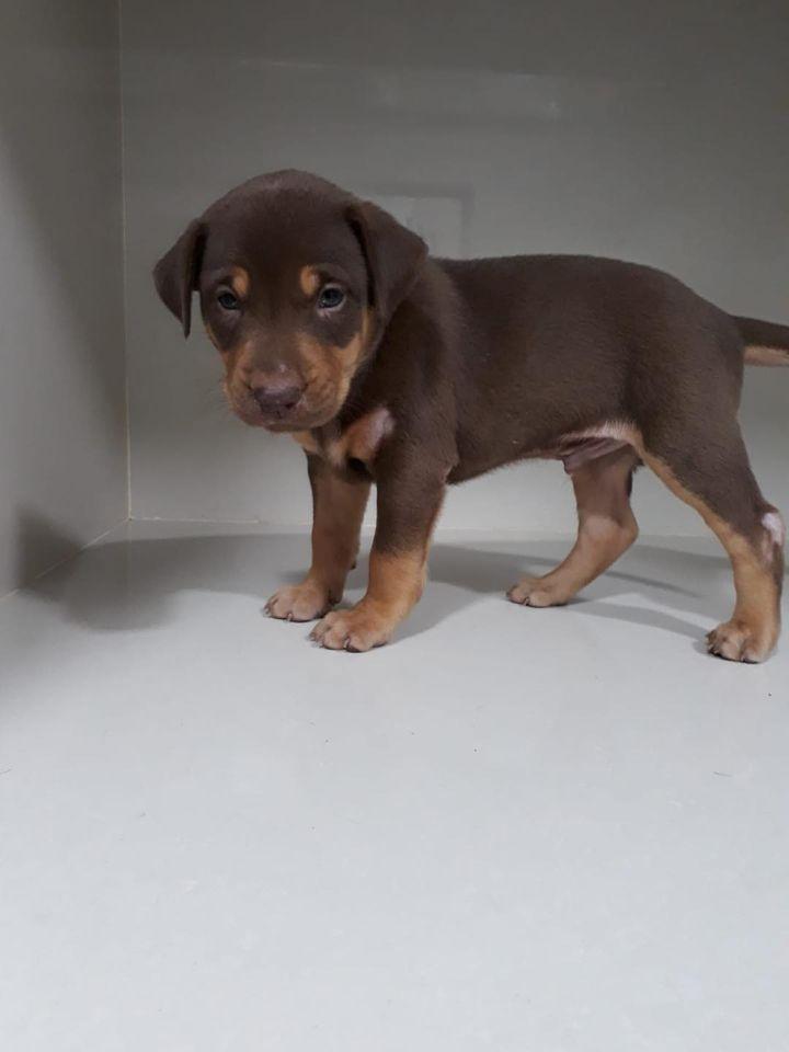 4 puppies-19 Feb 2021