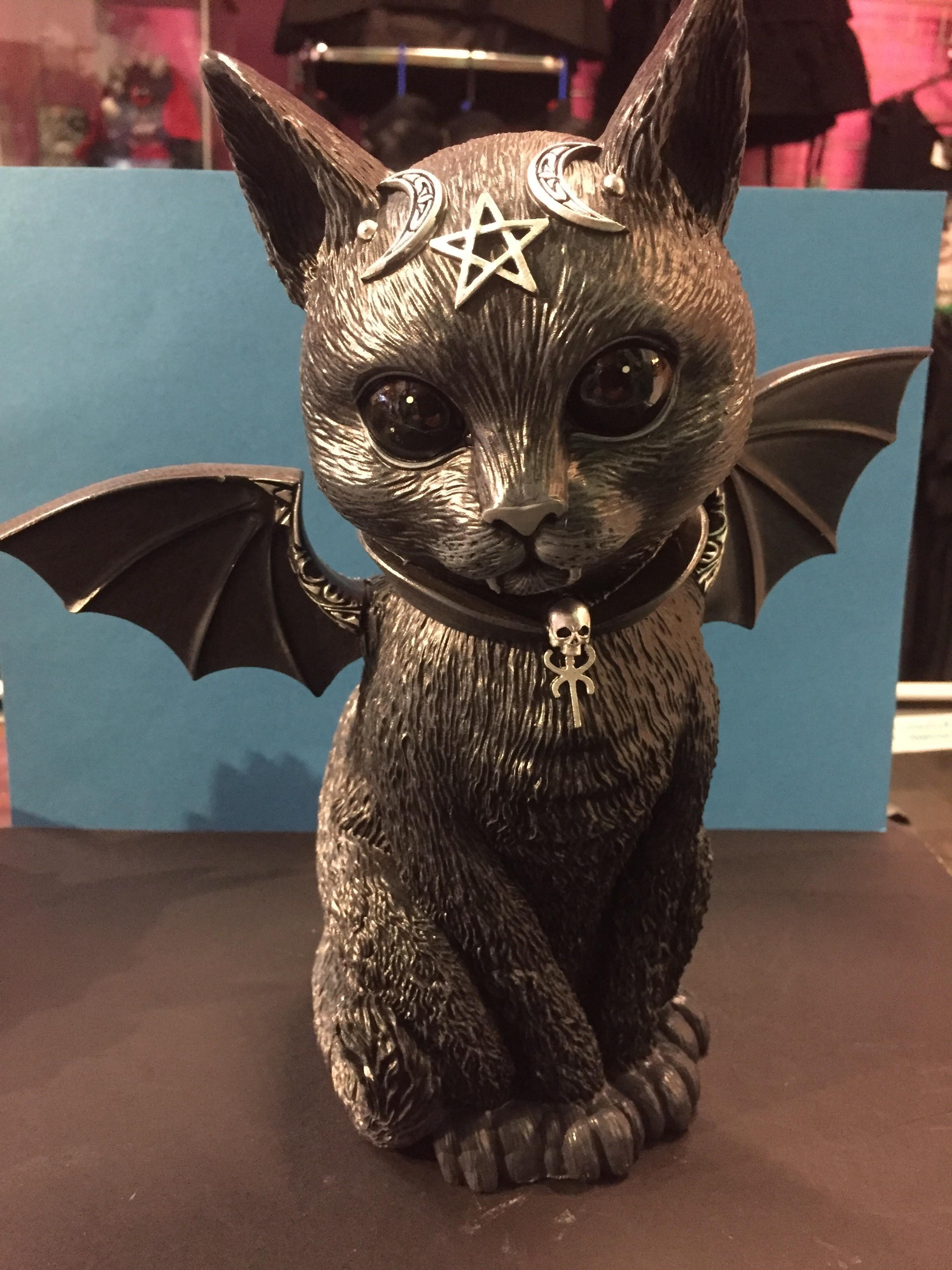 cutie bat cat