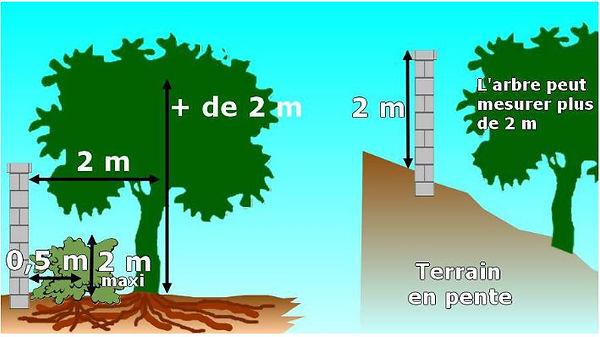 distances de plantations.JPG