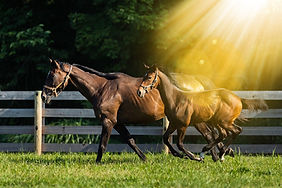 horse-66_edited.jpg