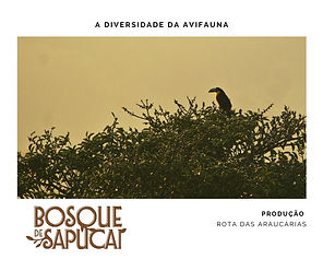 Bosque_de_Sapucaí___Birdwatching.jpg
