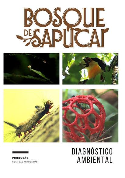 Bosque_de_Sapucaí_diagnóstico_simplifica