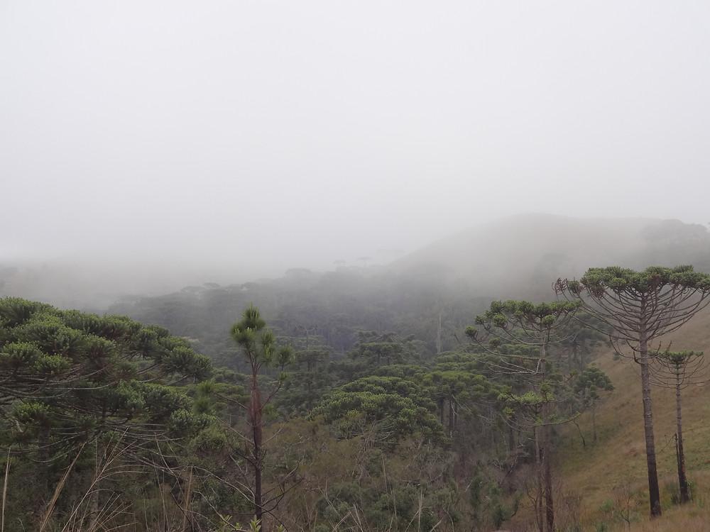 Nevoeiro presente nas Florestas com Araucárias em Campos do Jordão