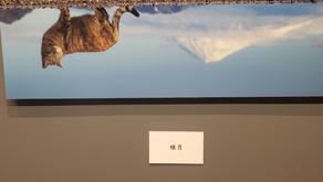366日のにゃん言葉 大阪展