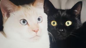 猫の噂も七十五日?