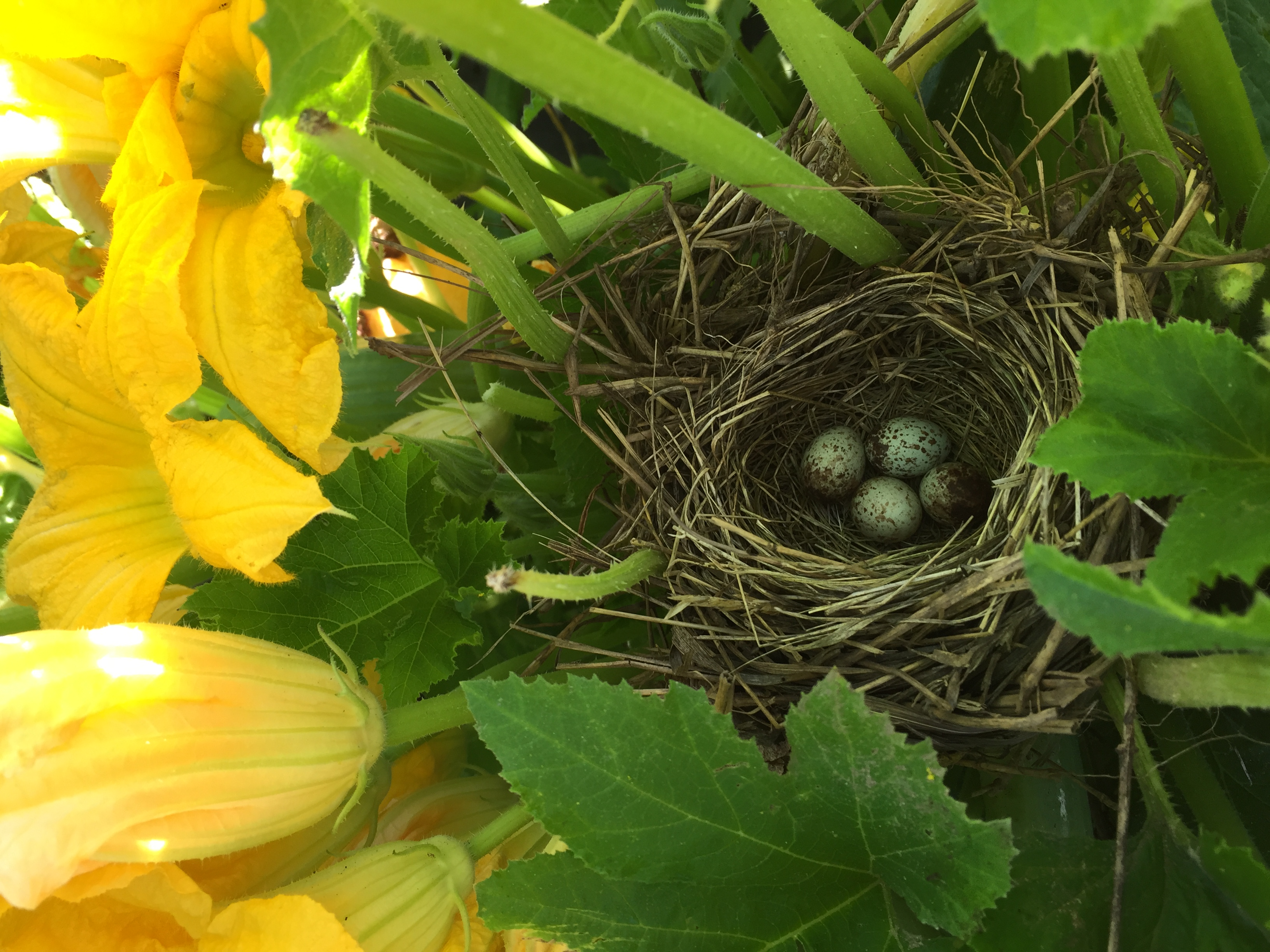 birds happily nesting in the squash