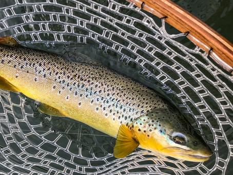Owyhee River Report 6/5/18