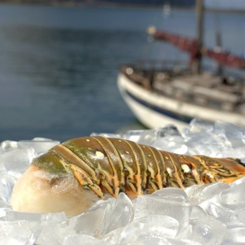 Spiny Lobster Tail (7-8 oz)