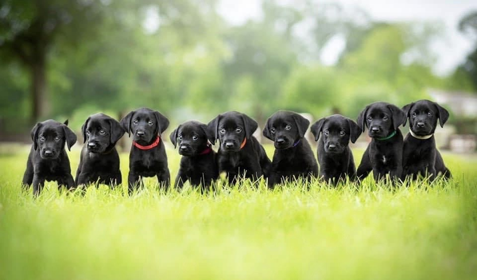 Puppies Unleashed