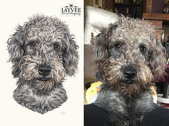 Reference vs drawing, pet art, dog drawing, pert portrait