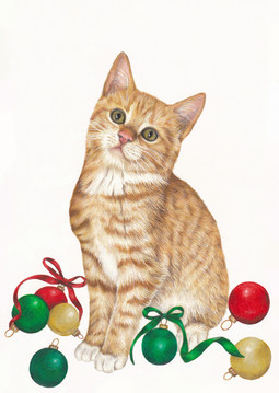 Little Paws Cat Haven Christmas Card Design