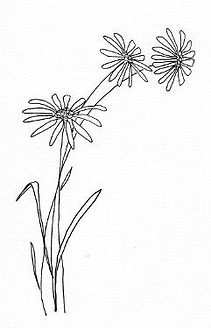 simple-flower-drawings-simple-daisy-draw