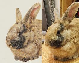 rabbit drawing pet portrait artist