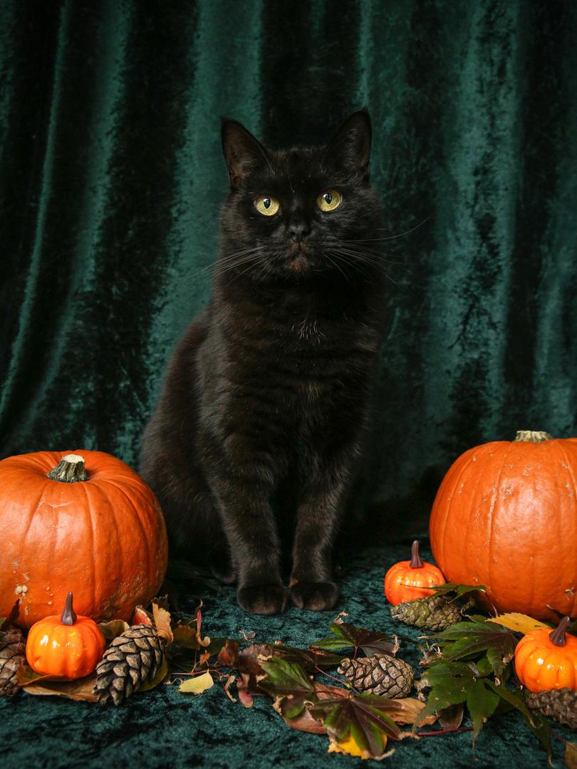 Jinny Halloween