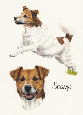 Scamp A4