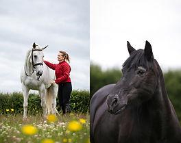 equine photoshoot testimonial staffordshire horse