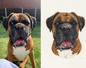 dog drawing artist pet portrait testimonial