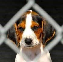 hound puppy.jpg