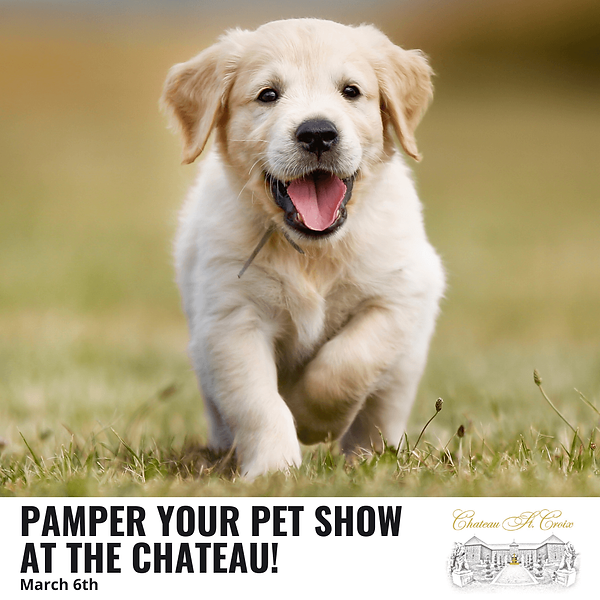 Chateau Pamper Your Pet (1) (1).png