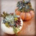 succulent-pumpkin-workshop (1).png