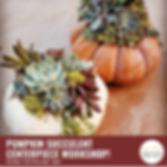 Pumpkin Succulent (1).png