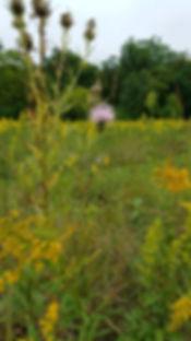 Prairie Restoration.jpg