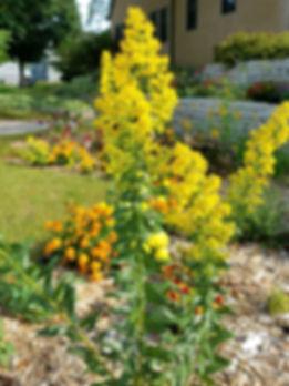 Pollinator Garden_edited.jpg