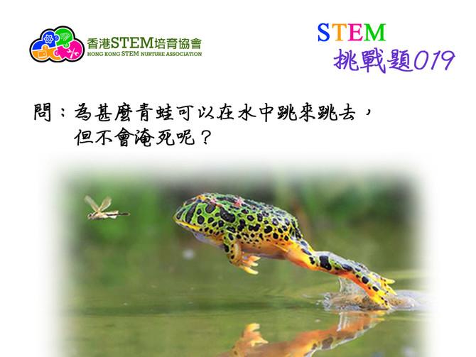 STEM挑戰題019