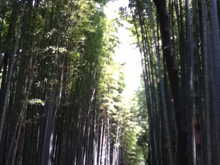 Bamboo, Koyto and Hiroshima Park
