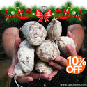 Special Offer for Petanque Clubs and Players for Xmas