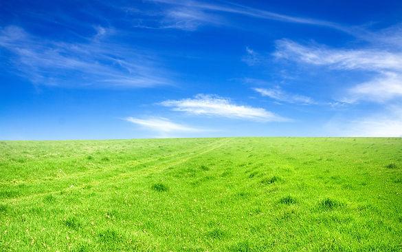 Green-grass-blue-sky_1680x1050.jpg