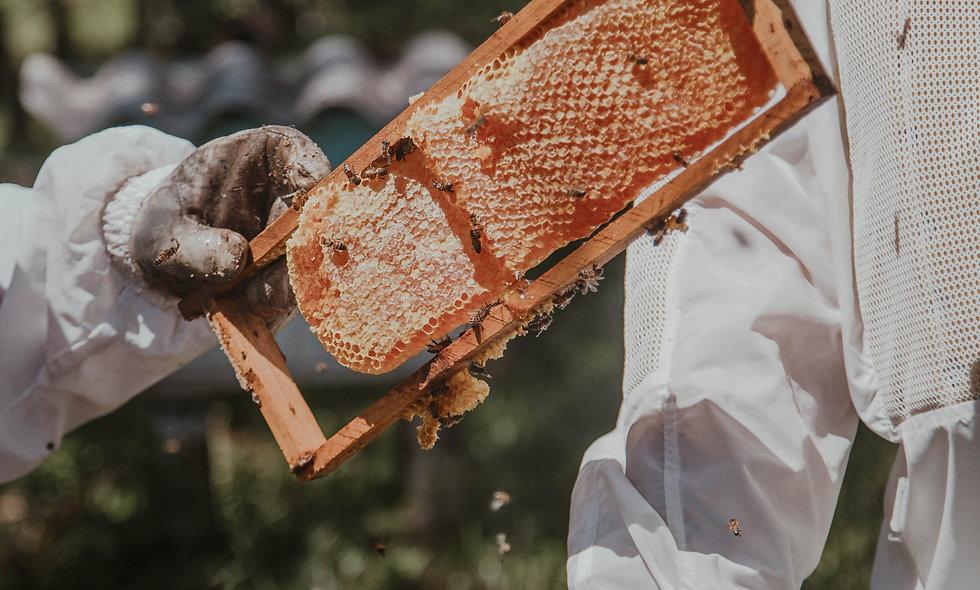 Bosche Honing uit eigen Imkerij