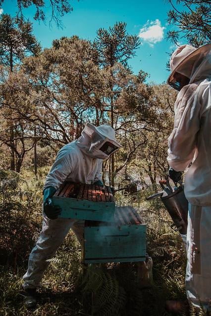 man-holding-beehive-2260932.jpg