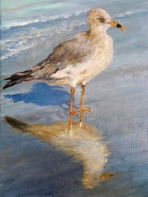 Seagul Reflecting