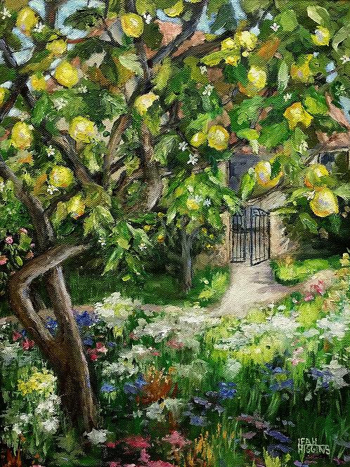 Sunlit Path and Lemons