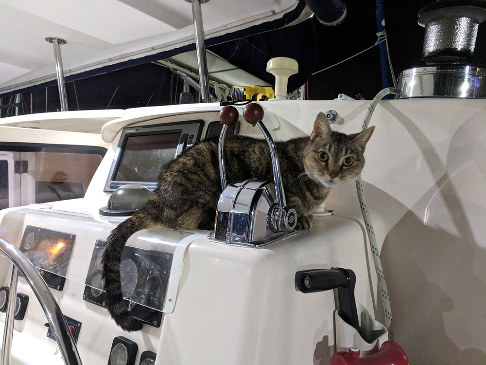 Kitty on the Helm!