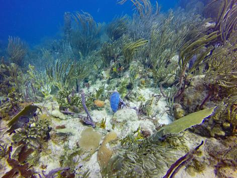 Virgin Islands Reef