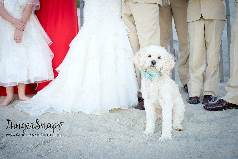 GingerSnaps Photography - 35.jpg