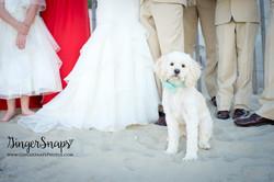 GingerSnaps Photography - 35.jpg