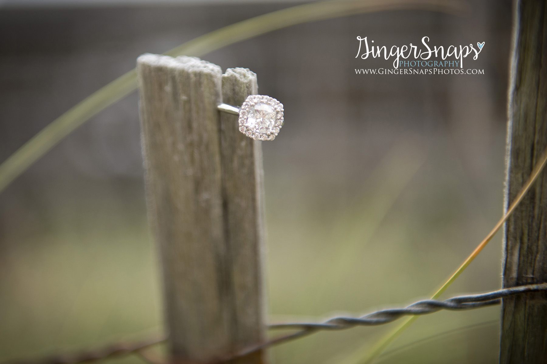 GingerSnaps Photography - 019.jpg