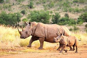 Rhino%20NCA_edited.jpg