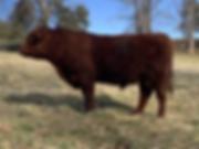 E119 Bull.HEIC