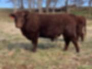 E85 Bull.HEIC