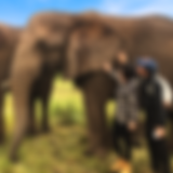 Elefantes_02.png