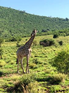 Safári na Reserva de Pilanesberg