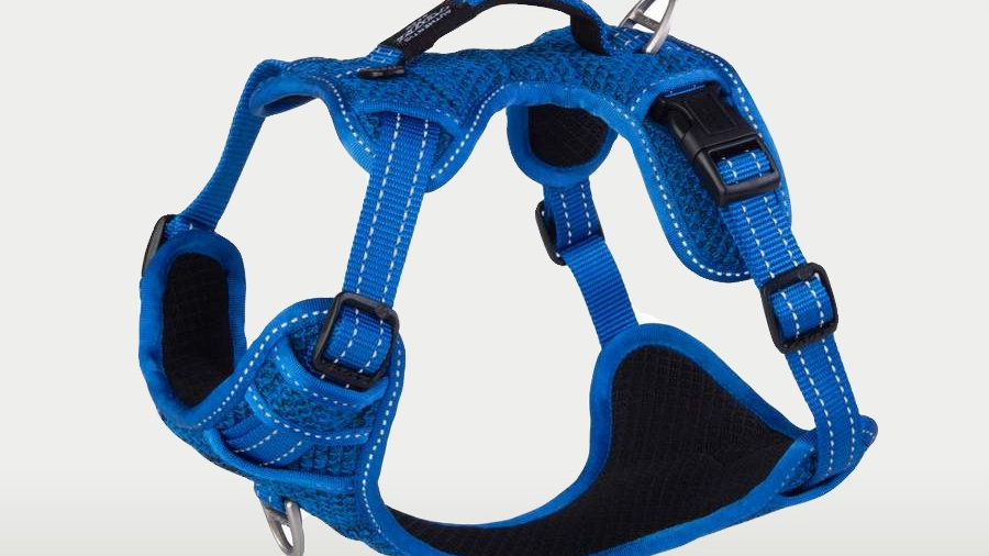 DAB Fancy Harness Blue