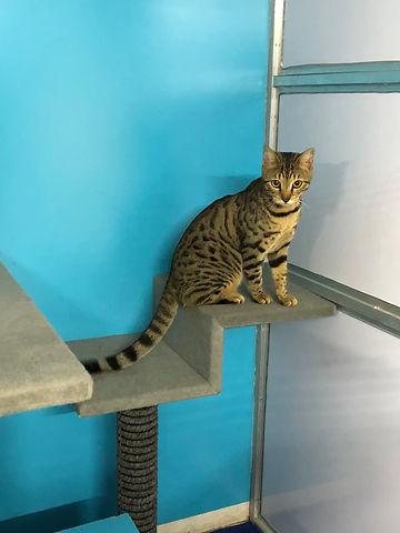 cat boarding 5.jpg