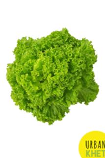 Lokarna Lettuce